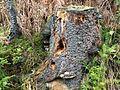 Nature around treestump.jpg