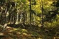 Nature reserve Ptaci stena in autumn 2011 (2).JPG