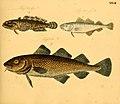 Naturgeschichte in Bildern mit erläuterndem Text (Taf. XXVII) (6058659929).jpg