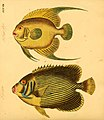 Naturgeschichte in Bildern mit erläuterndem Text (Taf. XXXVIII) (6059210088).jpg