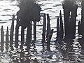 Naturschutzgebiet Ewiges Meer 31-10-2018 Chr Didillon DSC01778 (88).jpg