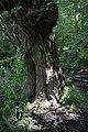 Naturschutzgebiet Haseder Busch - Im Haseder Busch (1).jpg