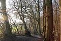 Naturschutzgebiet ST-094, Am Bagno-Buchenberg.dec2014.3.JPG