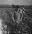Nederlandse soldaten in training. Prinses Irene Brigade. Meehelpen met de suike, Bestanddeelnr 934-9581.jpg