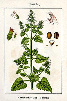 Anexo:Plantas medicinales (H-M) - Wikipedia, la