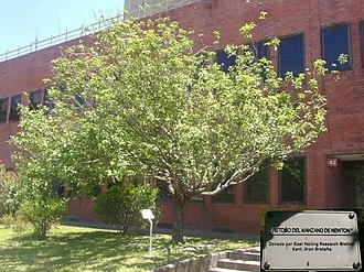 Jorge A. Sabato institute - A reputed descendant of Newton's apple tree at Instituto Sabato