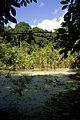 Ngezi forest.jpg