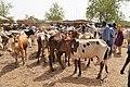 Niger, Boubon (12), weekly cattle market.jpg