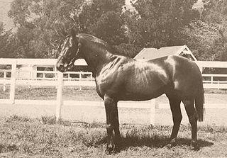 Night Raid British Thoroughbred stallion