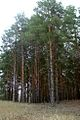 Nizhnehopersky Nature Park 010.JPG