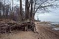 North Shore of Neva Gulf in December 2020 4.jpg