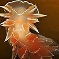 Nudibranchia (3674163856).jpg