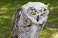 OWL (6018491358).jpg