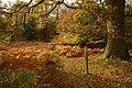 Oak tree in the Forest of Dean - geograph.org.uk - 1563008.jpg