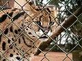Oaklawn Farm Zoo, May 16 2009 (3539742822).jpg