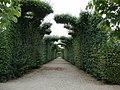 Ogród francuski - Schonbrunn - Vienna.jpg