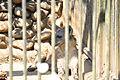 Omiya park zoo 009.jpg