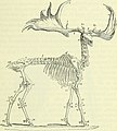 On the anatomy of vertebrates (electronic resource) (1866) (14568653688).jpg