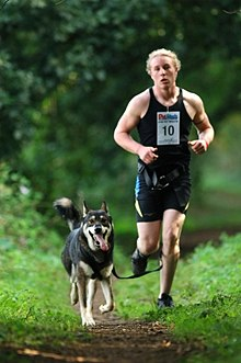 One of Akna K9 Academy' runners with a CSv Wolfdog cross also owned by Akna K9 Academy.jpg