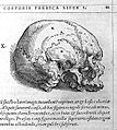 Osteology from Vesalius' De Humani Corporis Fabrica Wellcome L0006869.jpg