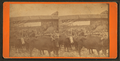 Oxen power, Maine scene, from Robert N. Dennis collection of stereoscopic views.png