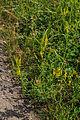 Přírodní památka Olešnice 60.jpg