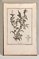 Page from Album of Ornament Prints from the Fund of Martin Engelbrecht MET DP703611.jpg
