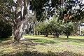 Panhandle park - San Francisco, CA - DSC02673.JPG