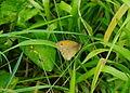 Papillon 03079 les Trous de Leu.JPG