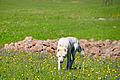 Paravani (14545315887).jpg