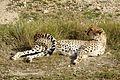 Parc animalier, Friguia, Tunisie, 25 décembre 2015 DSC 1868.jpg