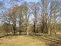 Parkland trees - geograph.org.uk - 700758.jpg