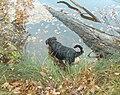 Parksee 16.11.2008 15-08-20.JPG