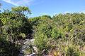Parque Nacional da Restinga de Jurubatiba 44.jpg
