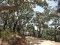 Parque natural de Los Alcornocales (Cádiz, España) 05.JPG
