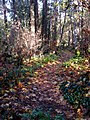 Path connecting Queenswood to Sherwood. READ INFO IN PANORAMIO-COMMENTS - panoramio.jpg