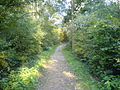 Path to Bank Top - geograph.org.uk - 586375.jpg