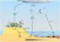 Pathways for guano-derived nitrogen to enter marine food webs.webp