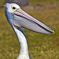 Pelican on lookout-3and (3851034773).jpg