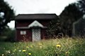 PermaLiv husmannstroens katedral 01-08-20 2.jpg