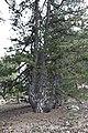 Persephone Nature Trail, Troodos, Cyprus - panoramio (18).jpg
