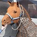 Pferd auf Juist 2010 PD 09.JPG