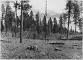 Photo taken where logging slash was tracotr piled during the supper of 1944 and was burned during late September and... - NARA - 298712.tif