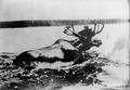 Photograph of Moose - NARA - 2127445.tif
