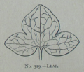 Picture Natural History - No 319 - Leaf.png