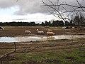 Pig farm south of Worlington - geograph.org.uk - 1638960.jpg