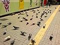 Pigeons in Tsim Sha Tsui Ferry Bus Terminus.jpg