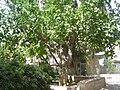PikiWiki Israel 13164 Ohel Moshe in Jerusalem.jpg