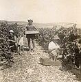 PikiWiki Israel 2784 Ramar Hashnaim - 1940 בציר ברמת השניים - 1940.jpg