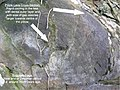 Pillow Lava SSSI Chipley Quarry closeup - cross section - geograph.org.uk - 1188622.jpg